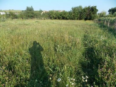 Teren intravilan cu utilitati PUD aprobat de vanzare Sura Mare Sibiu