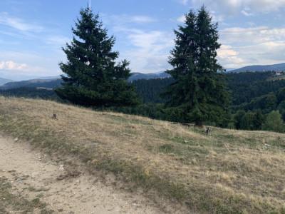 De vanzare teren in Paltinis de 1800 mp judetul Sibiu