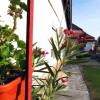 Garsoniera la casa de vanzare in Sibiu zona Lupeni thumb 8
