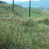 Teren extravilan de vanzare in Sebes zona Drumul Sibiului 16100 mp thumb 1